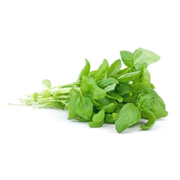 Organic Basil, Fresh – 1 Bunch